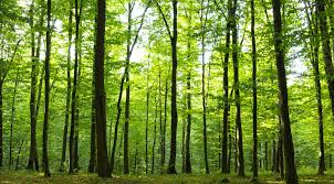 Louisiana forest images Home jpg