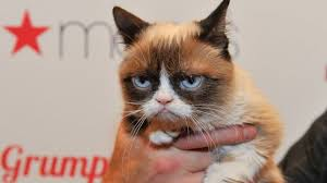 No Meme Grumpy Cat - grumpy cat wins 710 000 payout in copyright lawsuit bbc news