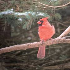 Backyard Bird Store Wild Birds Unlimited Home Facebook