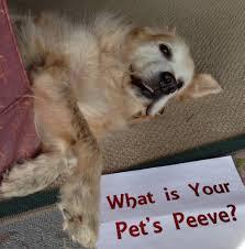 pet peeves roughwighting