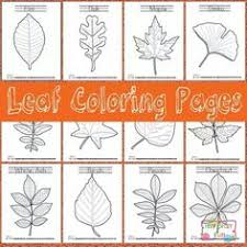 coloring pages of leaf shapes leaf coloring pages free printable leaves and botany