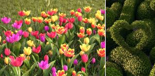 new hq plants hd 3d trees vol 03 hd 3d flowers vol 02 tulips