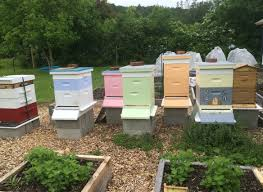 white mountain apiary we are a family operated apiary bringing