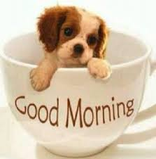 Good Morning Sunshine Meme - 23 best good morning sunshine images on pinterest buen dia