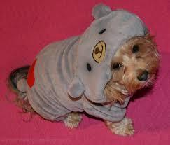 halloween costumes for yorkies dogs teddy bear yourdesignerdog