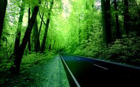 green forest wallpaper hd background 9 hd wallpapers natural