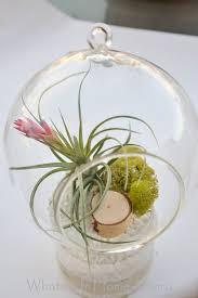 diy terrarium with air plants whats ur home story