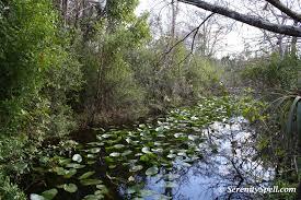 Florida forest images Fern forest nature center serenity spell jpg