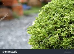ornamental plants stock photo 150634430 shutterstock
