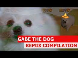Pomeranian Meme - gabe the dog bork remixes know your meme