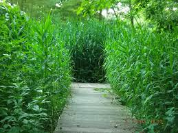 sorte de bambou pauline et thomas à paris deux gosses lachés dans la nature u2026