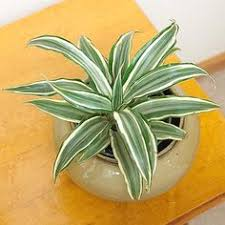low light plants for bedroom indoor plants for low light houseplant evergreen and storms