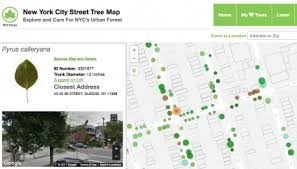 volunteers count every tree in new york city us forest