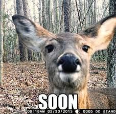 Funny Deer Memes - stalker deer memes quickmeme