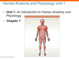 What Is Human Anatomy And Physiology 1 Spleen Anatomy And Physiology Ppt On Cells