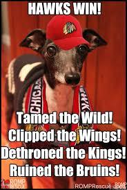 Blackhawks Meme - chicago blackhawks dogs 4 legged fans romp rescueromp italian