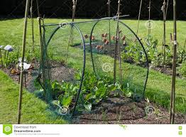 curved trellis and mesh garden protection stock image image