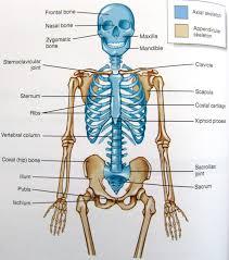 anatomy mcgraw hill images learn human anatomy image