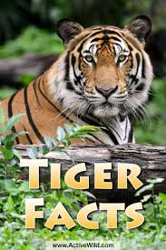 best 25 facts about endangered animals ideas on pinterest panda