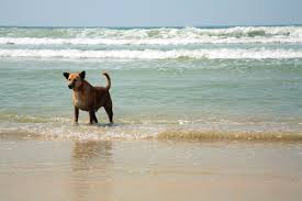 these dog friendly beaches welcome your furry friends