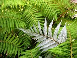 native plants nz nz week tuesday u2013 totaranui and abel tasman nat u0027l park sierra