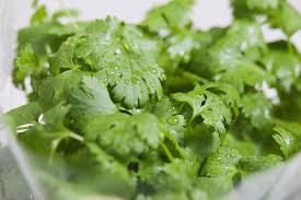 Easy Herbs To Grow Inside How To Grow Cilantro In Containers Indoors