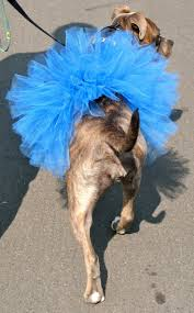 spirit halloween hattiesburg ms 40 best dog gone doggie tutus images on pinterest dog tutu