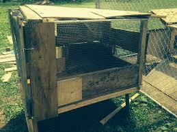 quail hutch backyard chickens