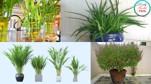 plants at home these 12 plants will bring positive energy in your homes youtube