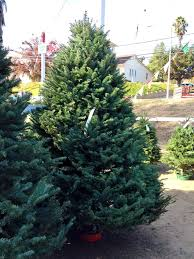 an ornamental christmas tradition the adventure is afoot