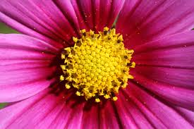 file free unedited happy little yellow stars in pink flower