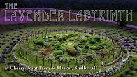 lavender labyrinth shelby mi a healthier michigan youtube