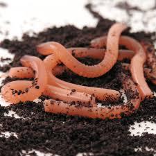 creepy earthworm cupcakes easybaked