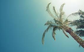 Palm Tree Wallpaper Pam Palm Tree Tree Blue Hd Wallpaper Nature And Landscape