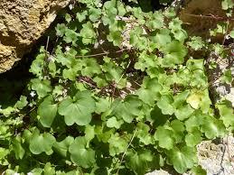 free images leaf food produce wall shrub cracks