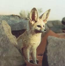 Bambi's Workshop {1/3} Images?q=tbn:ANd9GcRcQD9xsfD0VlGPgnGCZYni33sU8oJALlLCbmbGG4fSmla1C6Vwpg