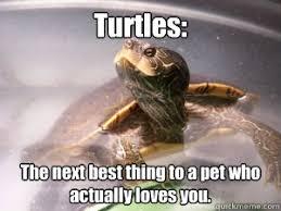 Turtle Memes - turtle meme memes quickmeme