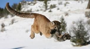 Colorado wildlife images The salvation of colorado wildlife pagosa springs journal jpg