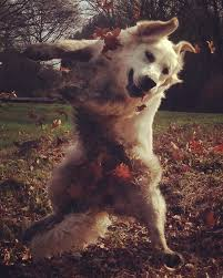 Dancing Dog Meme - my dancing dog meme guy