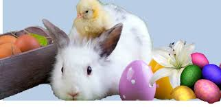 bunnies for easter chocolate or real consider carefully before adopting animals for