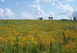 mn native plants prairie rice soil and water conservation district
