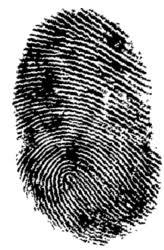 latent fingerprints science project education com