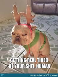 Getting Real Tired Meme - 15 very funny reindeer meme pictures and photos
