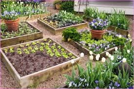 Garden Bed Layout Raised Vegetable Garden Beds Layout Home Design Ideas