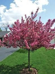 Small Backyard Trees by Good Trees For Small Backyards U2013 Maternalove Com