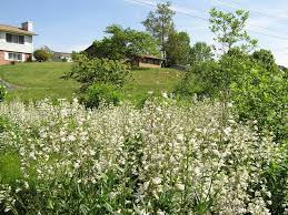native planting tennessee smart yards native plants a comprehensive database of