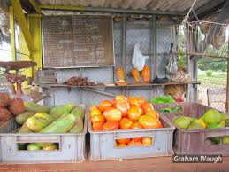 human nature cuban urban farming vivero alamar organiponico havana