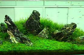 Aquascape Moss The Endler Shop Plants