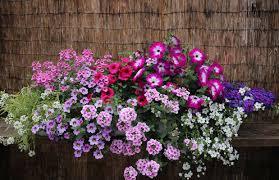 balkon blumen balkonblumenkästen wolfsburg musterbepflanzung blumen