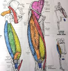 anatomy coloring book download hip images anatomy image collections learn human anatomy image